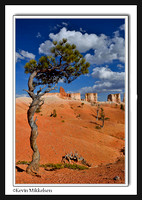 'Spiraled Pine' ~ Bryce Canyon Nat'l Park