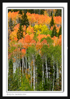 'Forest of Color' ~ High Uinta Mountains