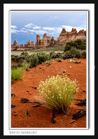 'Needles Springtime' ~ Chesler Park/Canyonlands