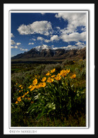 'North Ogden's Blooms' ~ Bonneville Shoreline Trail