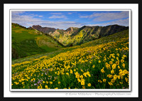 'July Mountain Flowers' ~ Wasatch Nat'l Forest