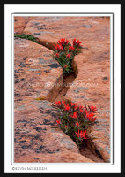 'Hearty Life' ~ Zion Nat'l Park