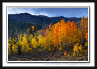 'Fiery Flames' ~ Logan Canyon