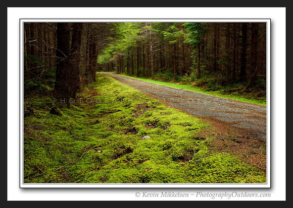'Abandoned Logging Road' ~ Olympic Nat'l Forest
