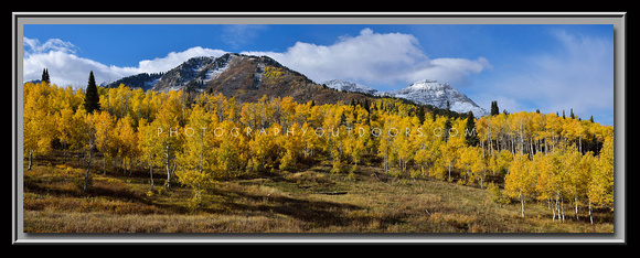 'Peak of the Season' ~ Alpine Loop/Uinta Nat'l Forest