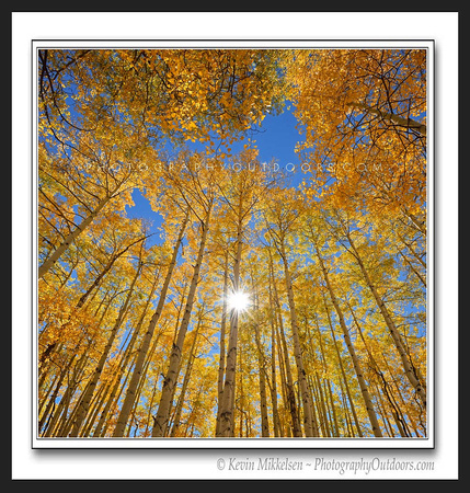 'Surrounded by Gold' ~ Wasatch Nat'l Forest