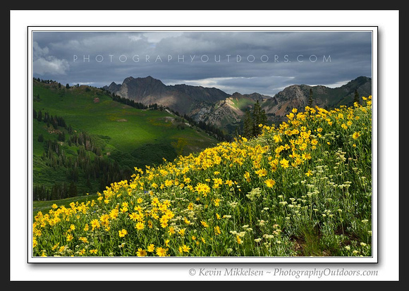 'Flower Storm' ~ Wasatch Nat'l Forest