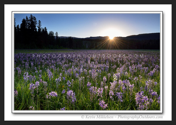 'Camas Lilly Sunrise' ~ Grand Teton Nat'l Park