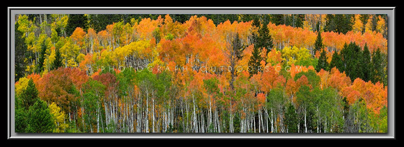 'Spectrum of Color' ~ High Uinta Mountains