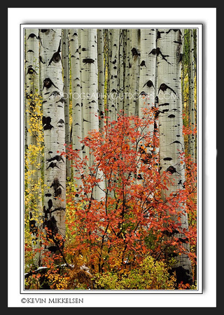 'Forest Companions' ~ Wasatch Nat'l Forest