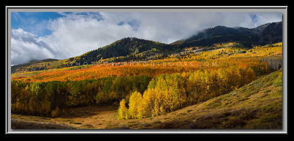 'Optimal Lighting' ~ Wasatch Nat'l Forest