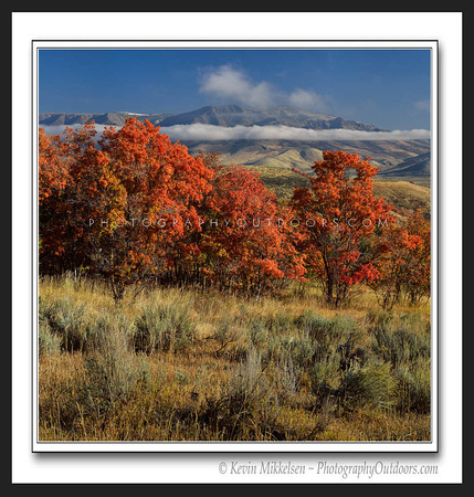 'Trappers Maples' ~ Wasatch Nat'l Forest