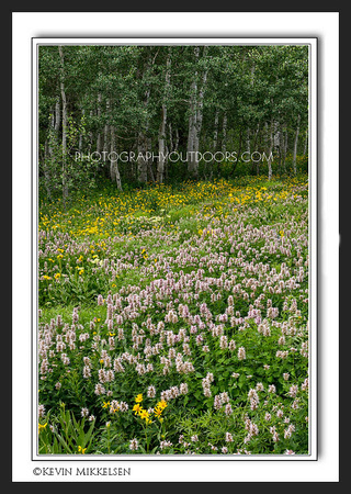 'Meadow Life' ~ Big Cottonwood Canyon
