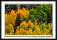 'Summer to Autumn' ~ Wasatch Nat'l Forest