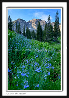 'Mountain of Blue Bells' ~ Albion Basin/Wasatch Nat'l Forest