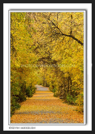 'Autumn Corridor' ~ Logan Canyon