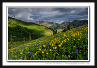 'Storm Flowers' ~ Albion Basin/Wasatch Nat'l Forest