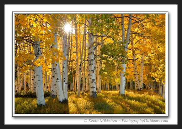 'Golden Aspen Sunset' ~ Fish Lake Nat'l Forest