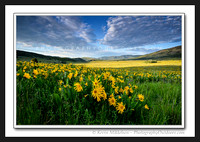 'Avons Fields of Yellow' ~ Wasatch Nat'l Forest