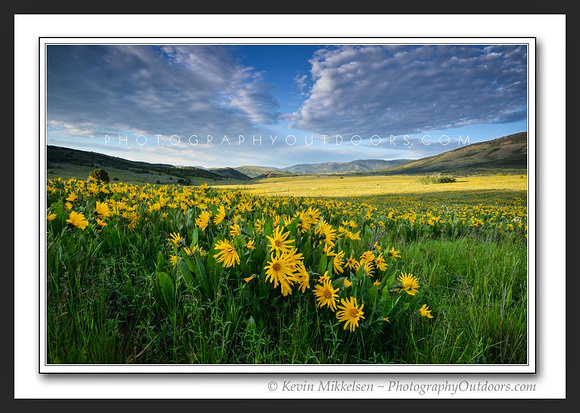 'Avons Fields of Gold' ~ Wasatch Nat'l Forest