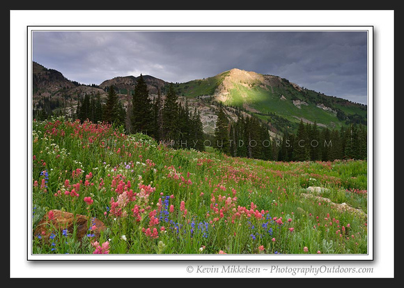 'Hint of Light' ~ Albion Basin/Little Cottonwood Canyon