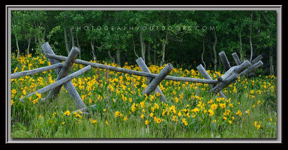 'Flowery Fenceline' ~ Wasatch Nat'l Forest