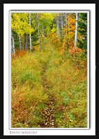 'Forest Trail' ~ Wasatch Nat'l Forest