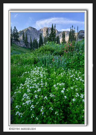'Flowers of Albion' ~ Wasatch Nat'l Forest