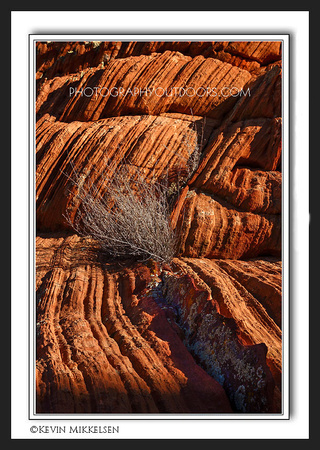 'Growing in Layers' ~ Vermilion Cliffs