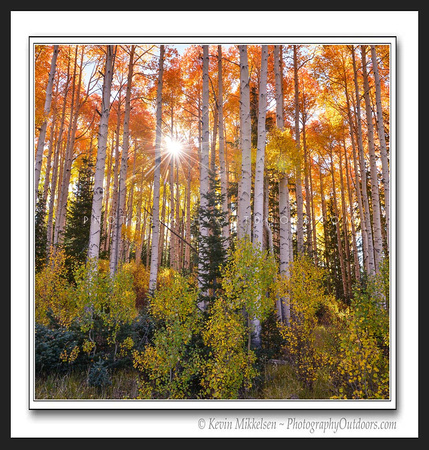 'Autumn Morning' ~ Dixie Nat'l Forest