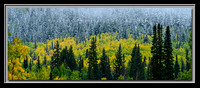 'Fall in the Forest' ~ Big Cottonwood Canyon
